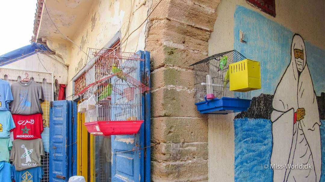 Budgies in small cages - Essaouira Medina Morocco - I really want to set them free