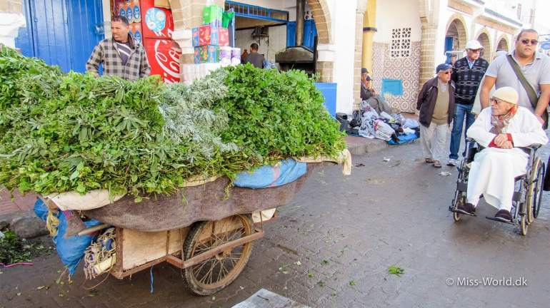 Essaouira Medina Morocco - Cart with mint leaves for Moroccan Tea