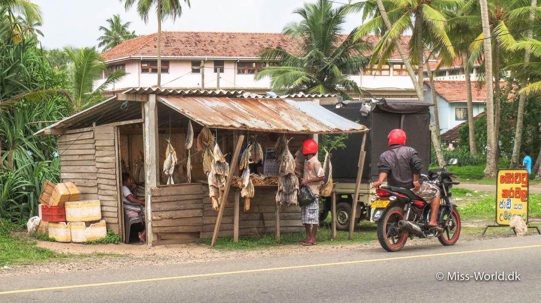Fiskehandleren i Hikkaduwa, Sri Lanka