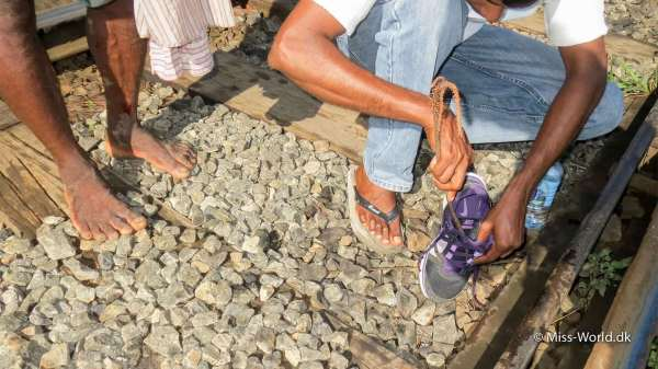 Igleangreb ved Nine Arch Bridge Sri Lanka - Manden bagved har blod på benet fra et iglebid