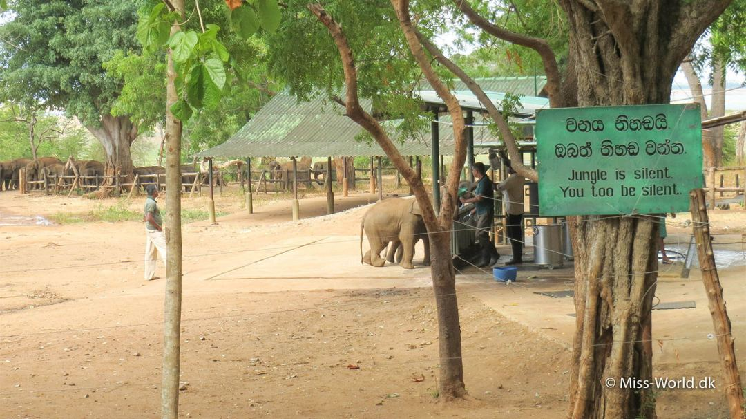 Jungle is silent - Elephant Transit Home Sri Lanka