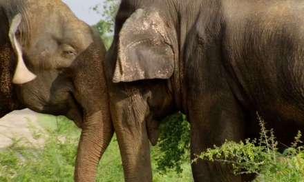 Sri Lanka Elephant Island • BBC Dokumentar