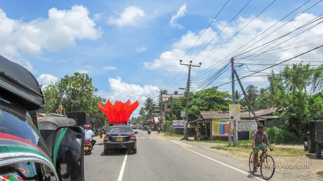 Vesak Lotus, Galle Sri Lanka