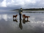 Mom and the Tollers
