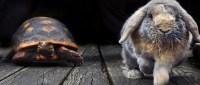 aesop's_tale_race_slow_fast_hare_tortoise_fable-hd-wallpaper-488409