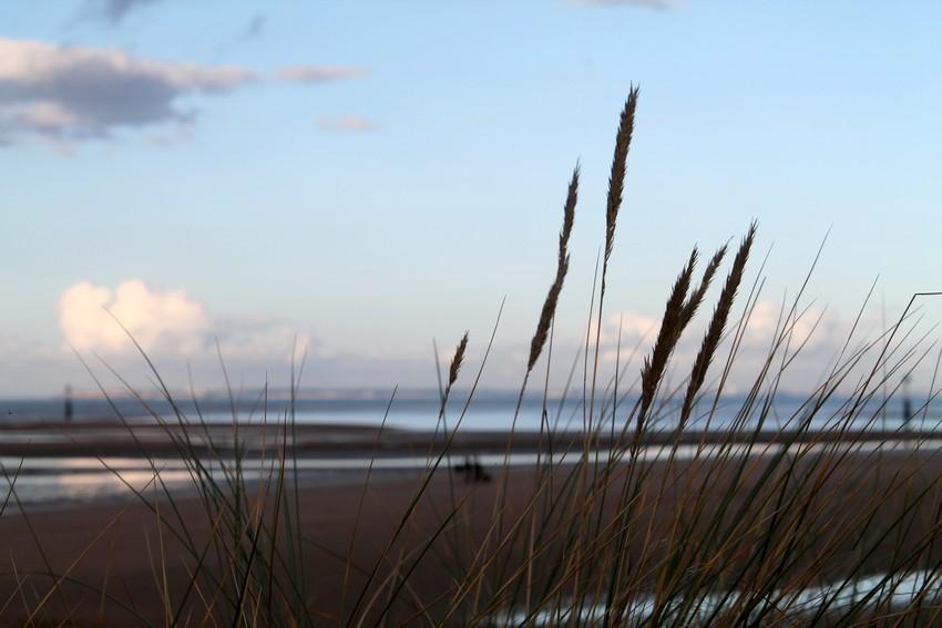 Entre les dunes 15