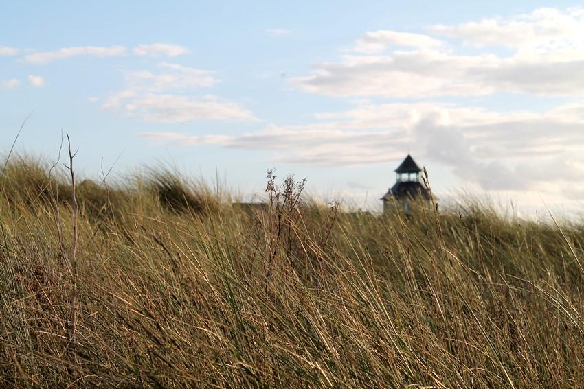 Entre les dunes 4