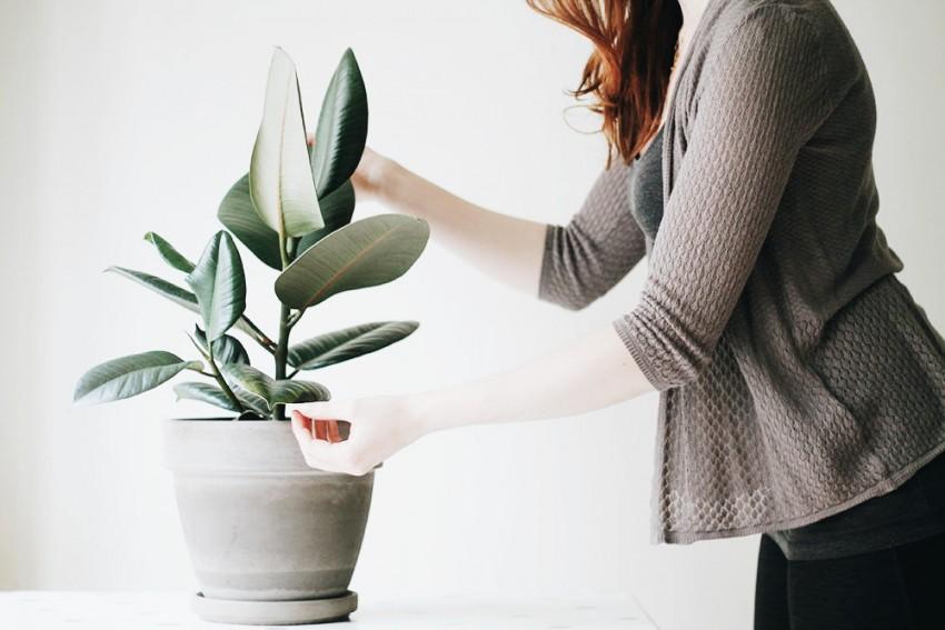 Réduire l'impact de son mode de vie sur l'environnement, quelques conseils pour les premiers temps - slow lifestyle - Miss Blemish