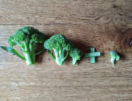 bauch, ssw 13, schwanger, mamablog, foodblog, schwangerschaft, broccoli, wie sage ich es