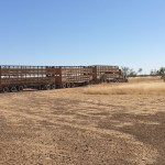 Outback Cattle Station: The Everyday