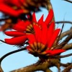 Fleur mer 001