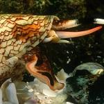 Les animaux marins les plus dangereux coquillage