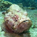 Les animaux marins les plus dangereux poisson