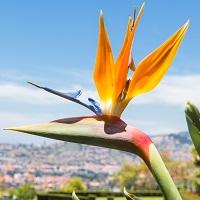 Fleur exotique oiseau de paradis