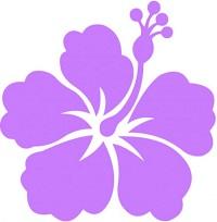 Hibiscus guide