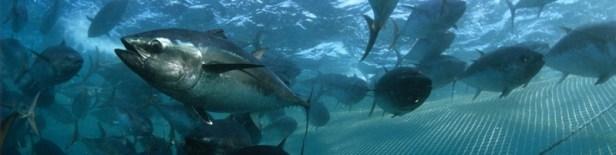 Animaux marins en danger d'extinction 3