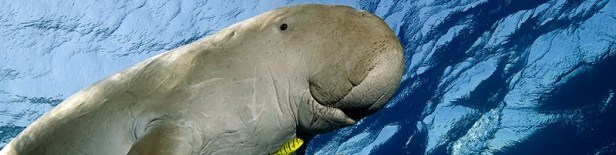 Animaux marins en danger d'extinction 4