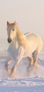 Proverbe citation cheval
