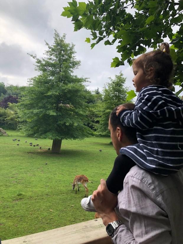 zoo_beauval_niños (4)