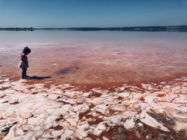 laguna rosa torrevieja (2)