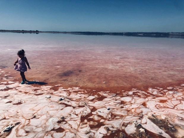 laguna rosa torrevieja (4)