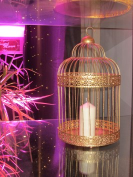 Enchanted Bird Cage