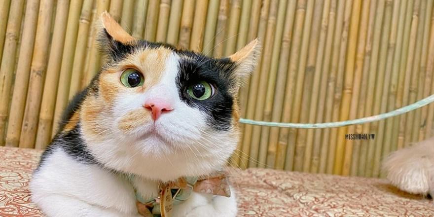 台中太平美食【MiRu食堂】平價日式料理新品牌!超可愛店貓~店狗迎接!貓奴~狗奴快來喔!