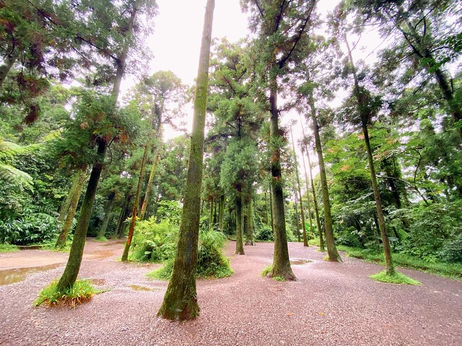 台北北投景點【竹子湖黑森林】陽明山小秘境!高聳樹林!小水池!雙心造景!