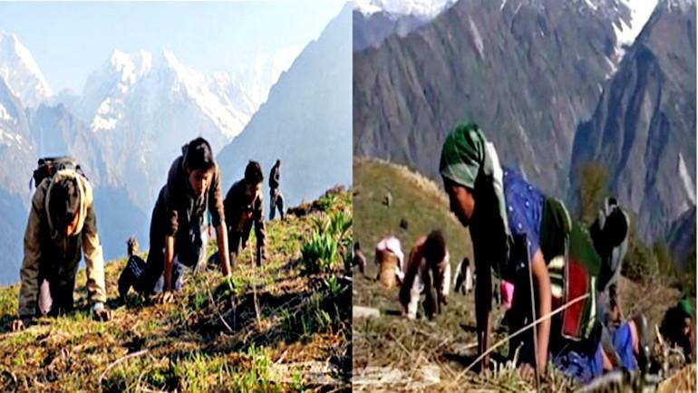 During Yarshaguma search in Nepal Himalayas