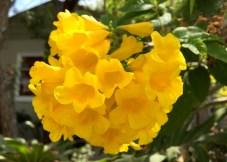 Summer Flower in Mission Beach
