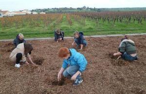 enfant drain arbres plantation