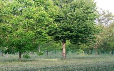 Découverte de l'agroforesterie dans le Saumurois