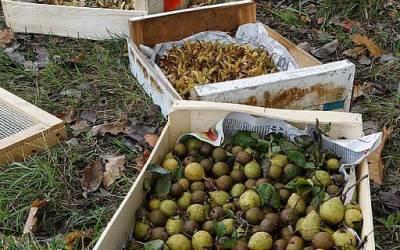 Végétaux d'origine locale, des graines à l'arbre