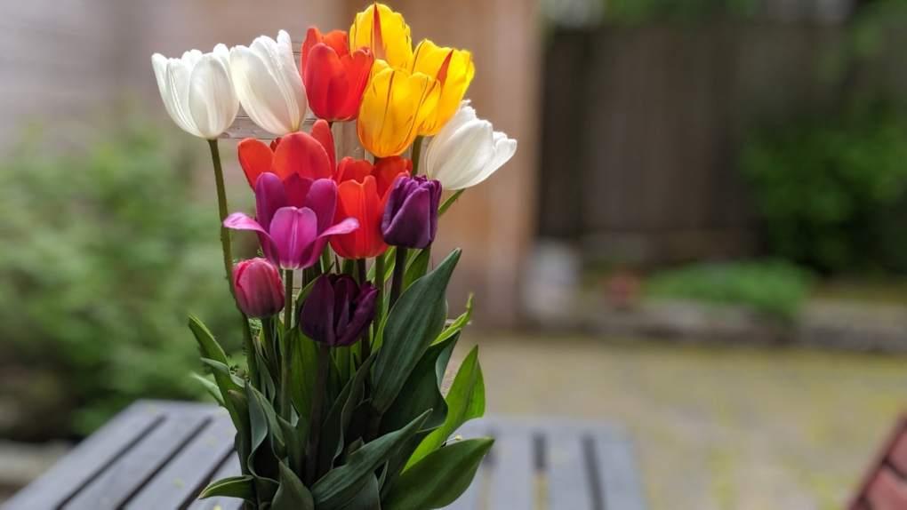 Un bouquet de tulipes tout simplement