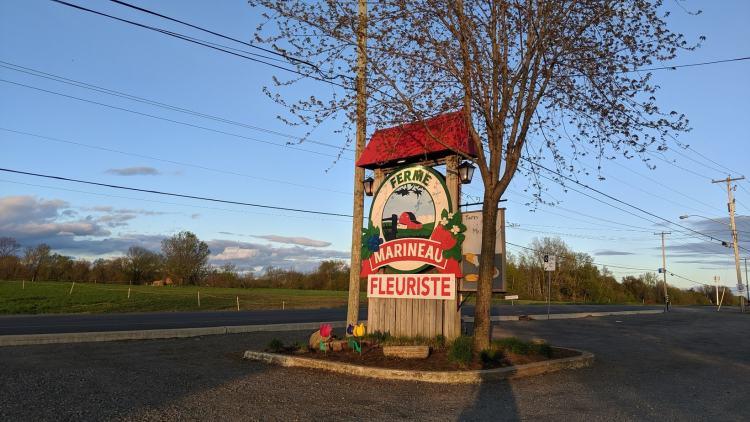Le festival des tulipes de Laval est propulsé par la ferme Marineau.