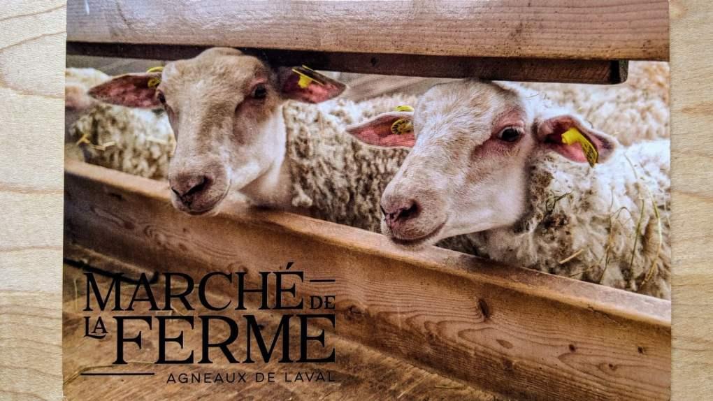 Des agneaux bien élevés