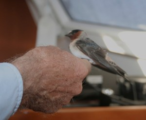 21. The bird hopped from the cooker onto Jeff's hand.