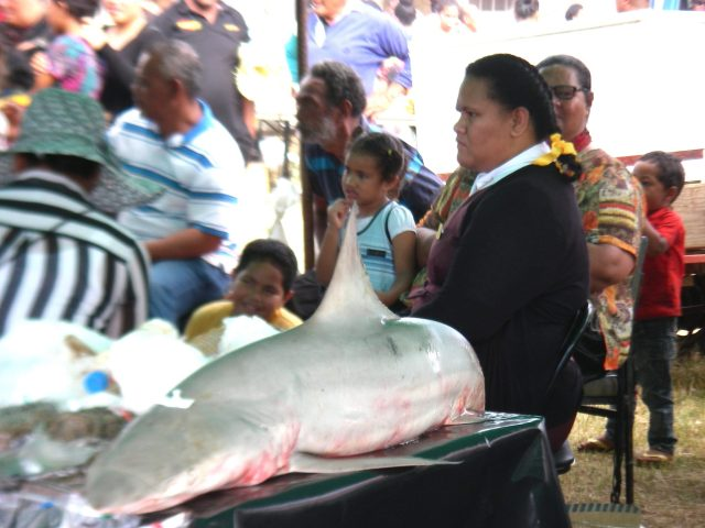 96. A shark was amongst the creatures of the sea that families brought to compete in the Ocean life division of the show