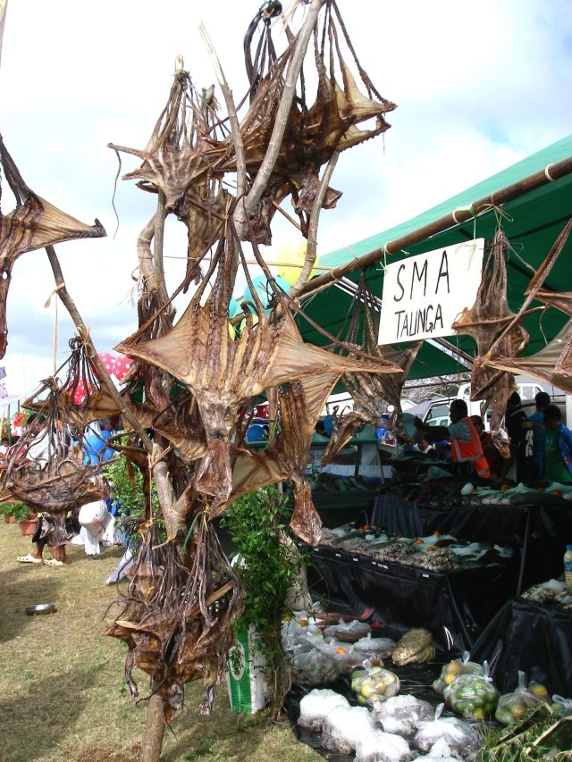 98. Dried octopus was a common entry for the Bounty of the Sea division. The various types of sea food displayed at the show was remarkable! Tongans sailed all night to bring fresh seafood to this show on Vava'u from neighboring Tongan islands!