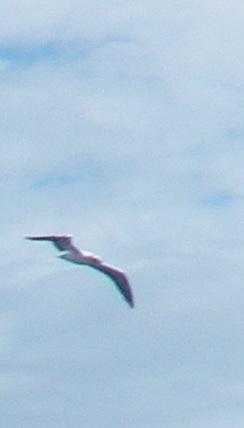 33-birds-a-birds-silhouette-can-help-identify-the-bird