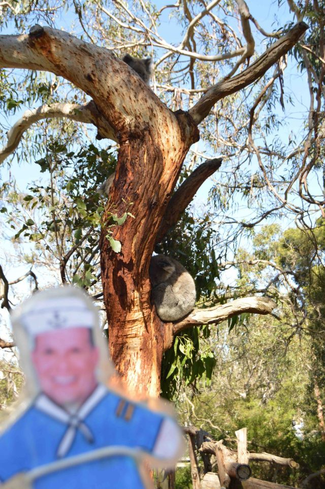 134.2. Flat Mr. Davis saw two koalas in this eucalyptus tree. Each koala has a favorite type of eucalyptus tree, of which it eats the leaves, and won't eat any other leaf from a differe