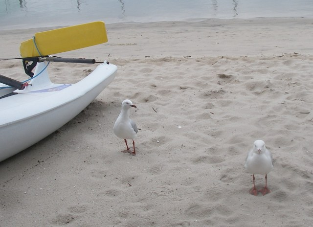 18.5 . Two seagulls stop to have their photo taken in Southport, Australia