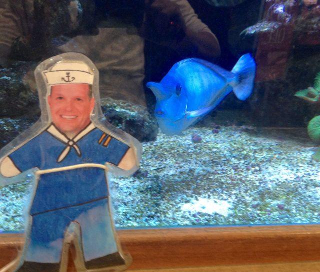 37. Flat Mr. Davis and blue fish