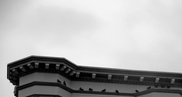 Pigeons seek shelter beneath a building overhang on 17th Street