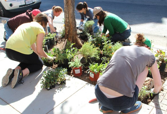 Volunteers planting away on 20th Street. Photo by Yousur Alhlou.