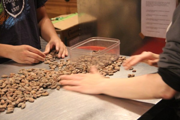 Each shipment is investigated by hand for small trash and damaged cocoa beans. Photo by Joe Rivano Barros.