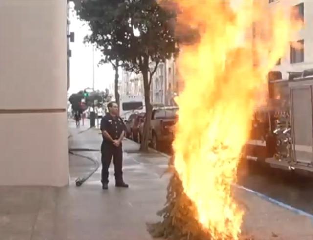 burning christmas tree on south van ness