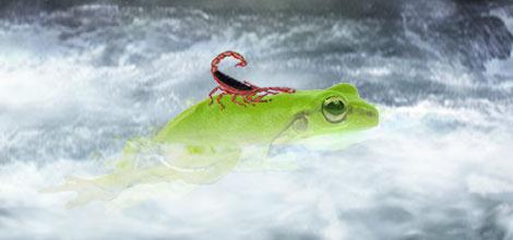"""Résultat de recherche d'images pour """"grenouille scorpion"""""""