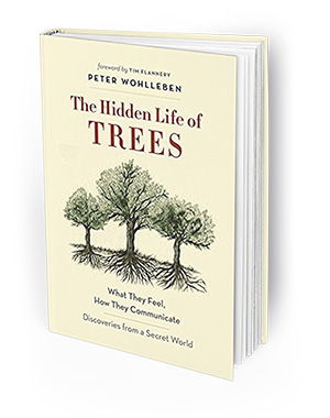 Stay cool at Allied Gardens Library   Mission Times Courier The Allied Gardens Library Book Club will read and discuss    The Hidden Life  of Trees    by Peter Wohlleben