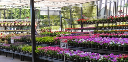 Walmart Garden Department Flowers